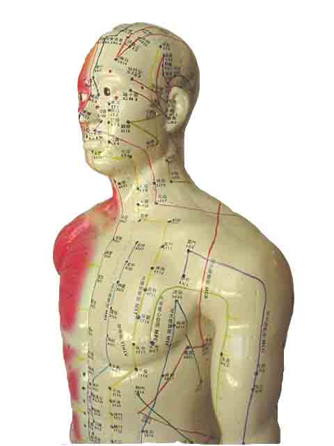 Is DNA the next internet ? Dna-acupuncture